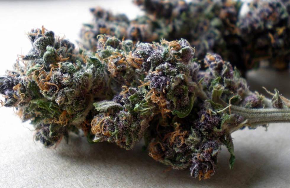 Conoce Las 10 Variedades Más Exóticas De Marihuana